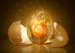 hvor meget protein er der i et æg